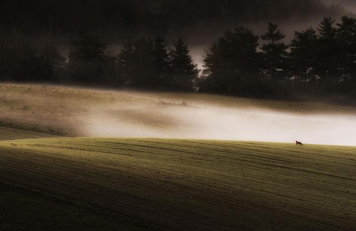 Fotografía de Iñaki Larrea para Nthephoto. En busca del desyuno. Abaurrea, Navarra.